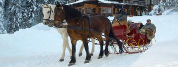 Pferdeschlitten 2