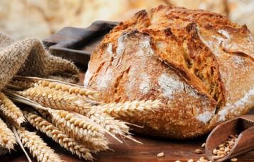 Frisches+Brot+mit+Ähren+und+Körnern+Foto+Fotolia+Grecaud+